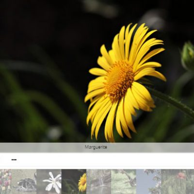 Awesome Responsive Photo Gallery | Image Gallery